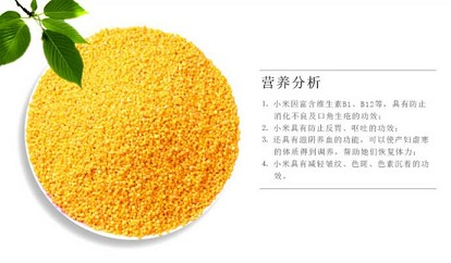(白盘)米脂小米